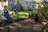 Sister looking at chickens while brother standing in background at backyard 11100064956| 写真素材・ストックフォト・画像・イラスト素材|アマナイメージズ