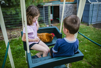 High angle view of siblings with chicken sitting on swing at backyard 11100067219| 写真素材・ストックフォト・画像・イラスト素材|アマナイメージズ