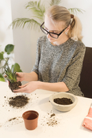 High angle view of businesswoman making houseplant at desk in creative office 11100068617| 写真素材・ストックフォト・画像・イラスト素材|アマナイメージズ