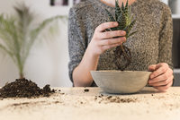 Midsection of businesswoman holding plant over concrete pot at desk in creative office 11100068618| 写真素材・ストックフォト・画像・イラスト素材|アマナイメージズ
