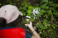 High angle view of hiker photographing plants through smart phone at Redwood National and State Parks 11100070972| 写真素材・ストックフォト・画像・イラスト素材|アマナイメージズ