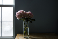 Hydrangeas in drinking glass at table against wall 11100071971| 写真素材・ストックフォト・画像・イラスト素材|アマナイメージズ