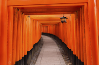 View of Torii gates at Fushimi Inari Shrine