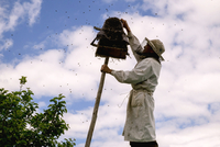 Low angle view of beekeeper removing honey from hive against cloudy sky 11100074875| 写真素材・ストックフォト・画像・イラスト素材|アマナイメージズ