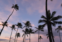 Low angle view of silhouette coconut palm trees against dramatic sky 11100074889| 写真素材・ストックフォト・画像・イラスト素材|アマナイメージズ