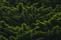 High angle view of trees growing in forest 11100076384| 写真素材・ストックフォト・画像・イラスト素材|アマナイメージズ