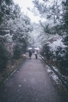 Rear view of women holding umbrella while walking on road by trees during snowfall 11100076445| 写真素材・ストックフォト・画像・イラスト素材|アマナイメージズ