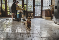 Female potter making clay pot at pottery with dog sitting on tiled floor in foreground 11100077233| 写真素材・ストックフォト・画像・イラスト素材|アマナイメージズ