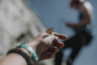 Moth on woman's hand with friend rock climbing in background during sunny day 11100077445| 写真素材・ストックフォト・画像・イラスト素材|アマナイメージズ