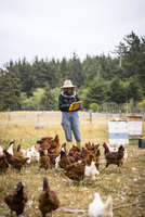 Female beekeeper working at farm with hens in foreground 11100077755| 写真素材・ストックフォト・画像・イラスト素材|アマナイメージズ