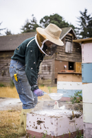Female beekeeper using strainer while working at farm 11100077758| 写真素材・ストックフォト・画像・イラスト素材|アマナイメージズ