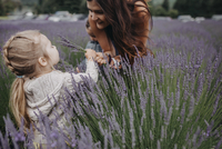 Daughter giving lavenders to mother on field 11100078905| 写真素材・ストックフォト・画像・イラスト素材|アマナイメージズ