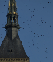 Birds flying by Le Mont Saint-Michel against clear sky during sunset 11100082979| 写真素材・ストックフォト・画像・イラスト素材|アマナイメージズ