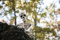Low angle view of human skeleton on rock against trees
