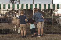 Rear view of siblings looking at goat in animal pen at farm 11100085973| 写真素材・ストックフォト・画像・イラスト素材|アマナイメージズ