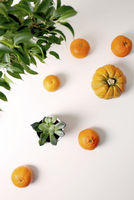 High angle view of succulent plant with oranges and pumpkin over white background 11100090669| 写真素材・ストックフォト・画像・イラスト素材|アマナイメージズ