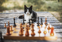 Portrait of cat sitting on wooden table with chess pieces in foreground at backyard 11100090878| 写真素材・ストックフォト・画像・イラスト素材|アマナイメージズ