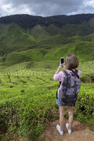 Rear view of female hiker photographing tea crops with smart phone 11100091288| 写真素材・ストックフォト・画像・イラスト素材|アマナイメージズ