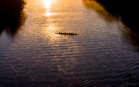 High angle distant view of people sculling on Lady Bird Lake during sunrise 11100091336| 写真素材・ストックフォト・画像・イラスト素材|アマナイメージズ