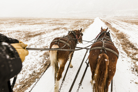 Cropped hands of person riding horse cart during snowfall 11100091607| 写真素材・ストックフォト・画像・イラスト素材|アマナイメージズ
