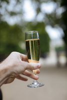 Cropped hand of man holding champagne flute at park 11100093045| 写真素材・ストックフォト・画像・イラスト素材|アマナイメージズ