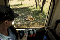 High angle view of woman with camera looking at lion while traveling in bus 11100093399| 写真素材・ストックフォト・画像・イラスト素材|アマナイメージズ