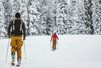 couple of skiers make their way across snowy field with pine trees