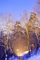 snow covered trees i a city park at night