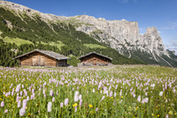 Flower meadow in the spring on the Seiser Alm in the 11102001828| 写真素材・ストックフォト・画像・イラスト素材|アマナイメージズ