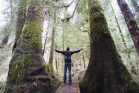 A hiker in the old growth forest at Carmanah Walbran Provincial Park, Vancouver Island 11104008496| 写真素材・ストックフォト・画像・イラスト素材|アマナイメージズ