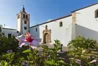 Hibiscus flowers and the 17th century Santa Maria Cathedral in this historic former capital, Betancuria, Fuerteventura, Canary I 11104009862| 写真素材・ストックフォト・画像・イラスト素材|アマナイメージズ