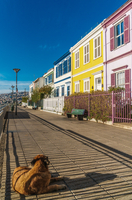 Brightly coloured clapboard houses on Paseo Atkinson with dog in foreground, Valparaiso, UNESCO World Heritage Site, Chile, Sout 11104028679| 写真素材・ストックフォト・画像・イラスト素材|アマナイメージズ