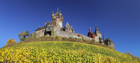 Reichsburg Castle and vineyards in autumn, Cochem, Moselle Valley, Rhineland-Palatinate, Germany, Europe 11104031499| 写真素材・ストックフォト・画像・イラスト素材|アマナイメージズ