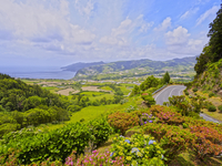 Portugal, Azores, Sao Miguel, Nordeste, View of the Eastern Coast with Hortensias in the foreground. 11108003073| 写真素材・ストックフォト・画像・イラスト素材|アマナイメージズ
