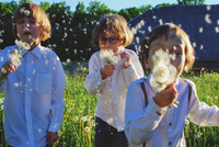 friends blowing dandelions while standing on grassy field 11115000003| 写真素材・ストックフォト・画像・イラスト素材|アマナイメージズ