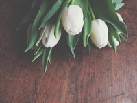 High Angle View Of White Tulips On Table 11115028054| 写真素材・ストックフォト・画像・イラスト素材|アマナイメージズ