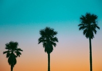 Low Angle View Of Silhouette Palm Trees Against Clear Sky 11115046876| 写真素材・ストックフォト・画像・イラスト素材|アマナイメージズ