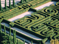 High Angle View Of Hedges In Garden 11115050907| 写真素材・ストックフォト・画像・イラスト素材|アマナイメージズ