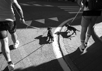 Low Section Of Friends Walking With Dog On Street 11115051004| 写真素材・ストックフォト・画像・イラスト素材|アマナイメージズ