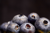 Close-up Of Blueberries Against Black Background 11115080803| 写真素材・ストックフォト・画像・イラスト素材|アマナイメージズ