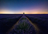 Scenic View Of Flowers Growing On Landscape Against Star Field At Night 11115081199| 写真素材・ストックフォト・画像・イラスト素材|アマナイメージズ