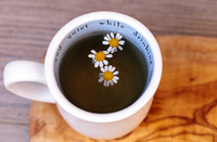 Close-up Of White Daisies In Herbal Tea On Table 11115084806| 写真素材・ストックフォト・画像・イラスト素材|アマナイメージズ
