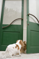 ドアの向こうを覗く犬 28204000032| 写真素材・ストックフォト・画像・イラスト素材|アマナイメージズ