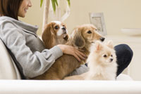 ソファでくつろぐ犬と女性 28204000036| 写真素材・ストックフォト・画像・イラスト素材|アマナイメージズ