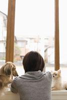 窓辺の女性と犬 28204000041| 写真素材・ストックフォト・画像・イラスト素材|アマナイメージズ