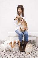 犬の毛の手入れをする女性 28204000050| 写真素材・ストックフォト・画像・イラスト素材|アマナイメージズ