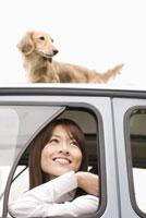 車上のミニチュアダックスフントと女性 28204000064| 写真素材・ストックフォト・画像・イラスト素材|アマナイメージズ