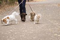 散歩中の犬 28204000072| 写真素材・ストックフォト・画像・イラスト素材|アマナイメージズ