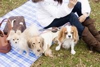3匹の犬と女性 28204000083| 写真素材・ストックフォト・画像・イラスト素材|アマナイメージズ
