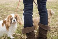散歩中の犬 28204000099| 写真素材・ストックフォト・画像・イラスト素材|アマナイメージズ